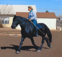 Horseback Riding and Training in Albuquerque, New Mexico